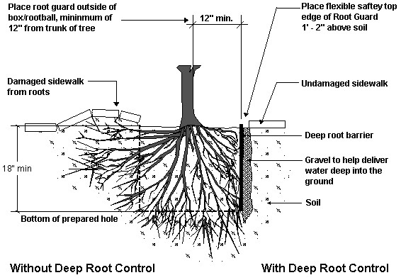 Protect your Hardscapes with Century Root Barriers | Garden View