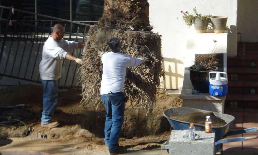 James palm planting