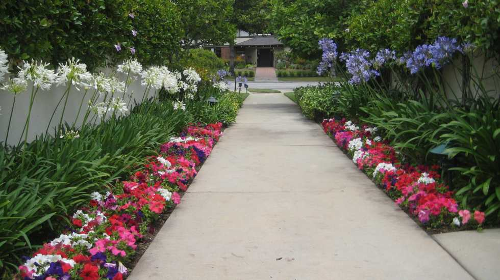 annual flowers pathway