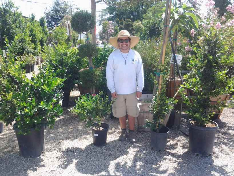 Assorted Ligustrum