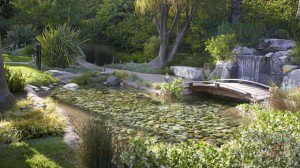 Rock pond with bridge in Pasadena backyard