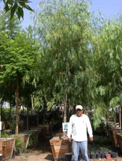 Trees Garden View Landscape Nursery Amp Pools