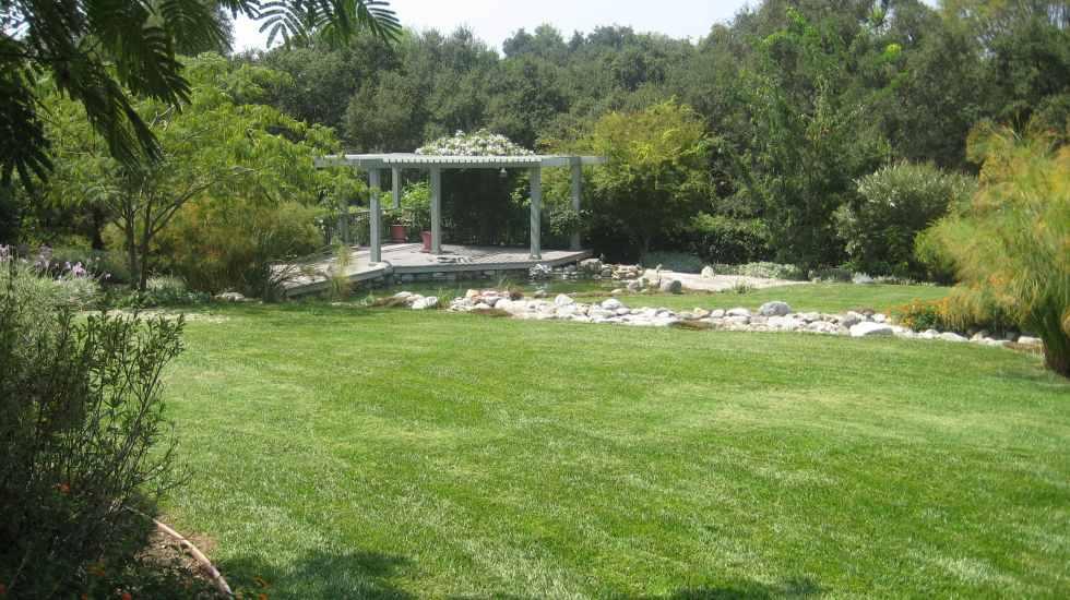 fescue lawn landscape