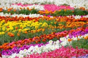 yellow purple red orange and white flower bed