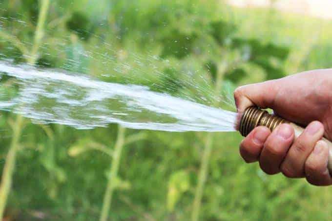 hand watering plants
