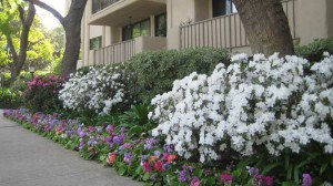 Impatiens and Azaleas at HOA