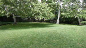 Lawn and tree landscape maintenance