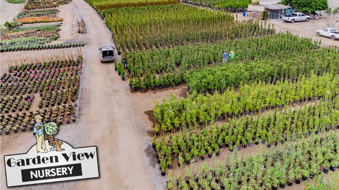 Bird's eye view of hedges and shrubs at Garden View Nursery