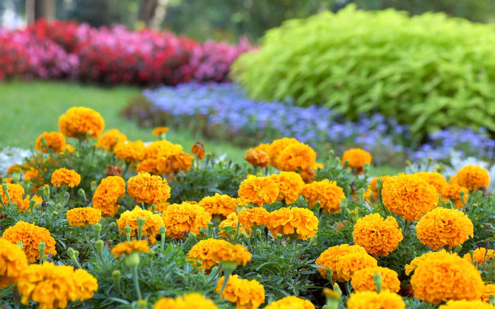 orange red and blue flower beds