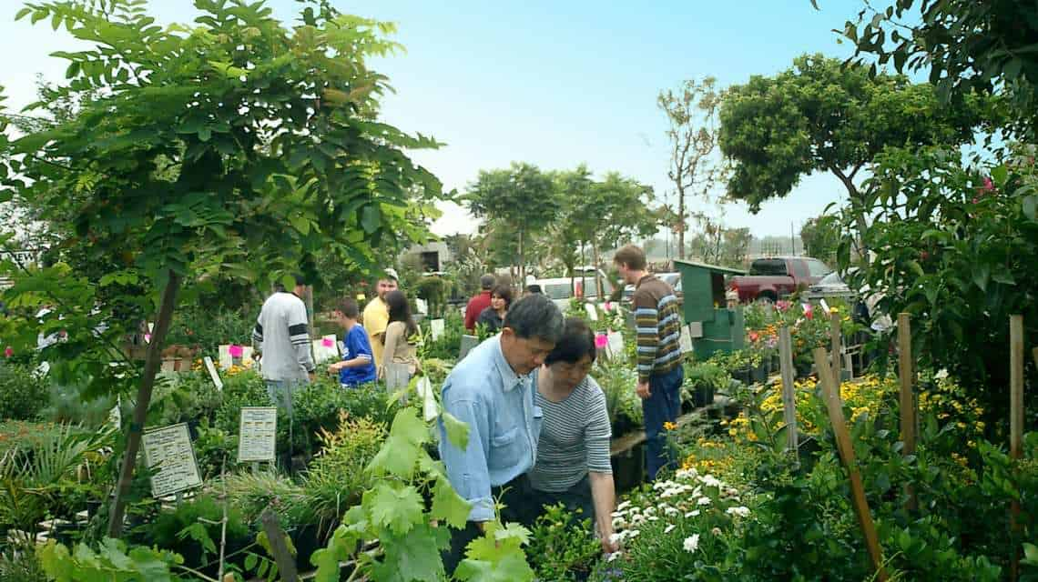 group of people selecting plants in front retail area of nursery