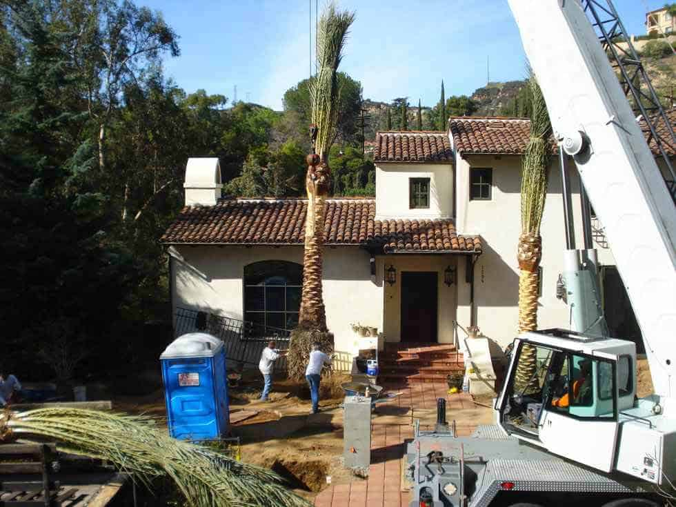 Large Palm Trees being installed by crane