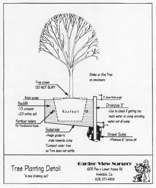 Diagram On How To Plant A Tree Or Shrub In Bad Draining Soil