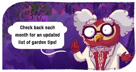 Professor Hooticulture garden tip owl