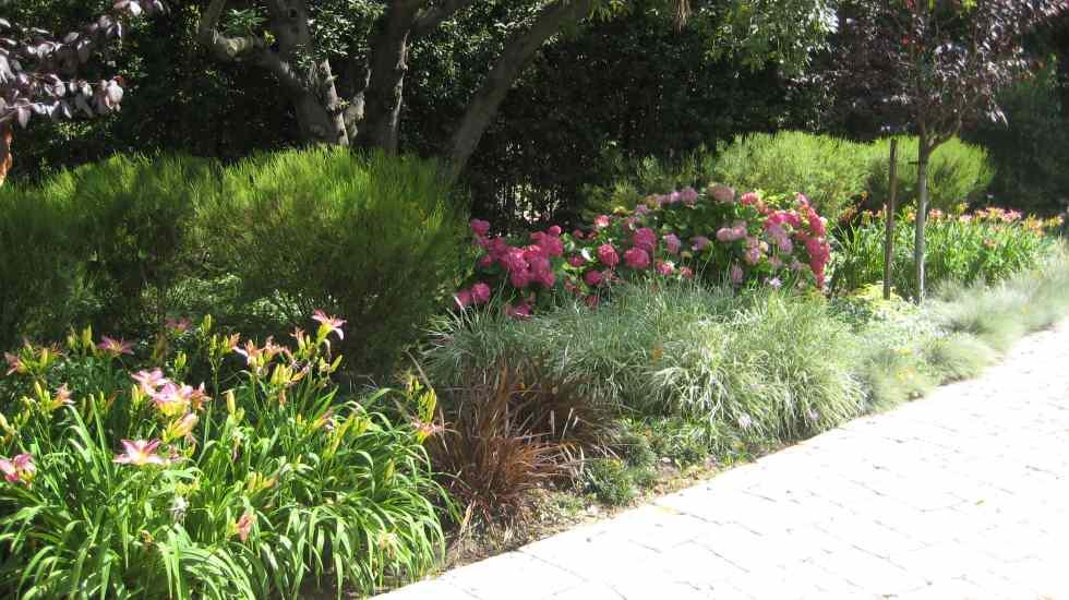 rose garden along paver driveway