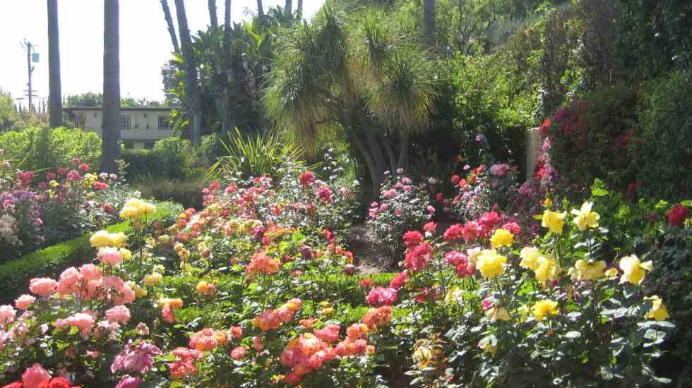 rose garden landscape maintenance
