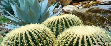 Succulents & Cactii