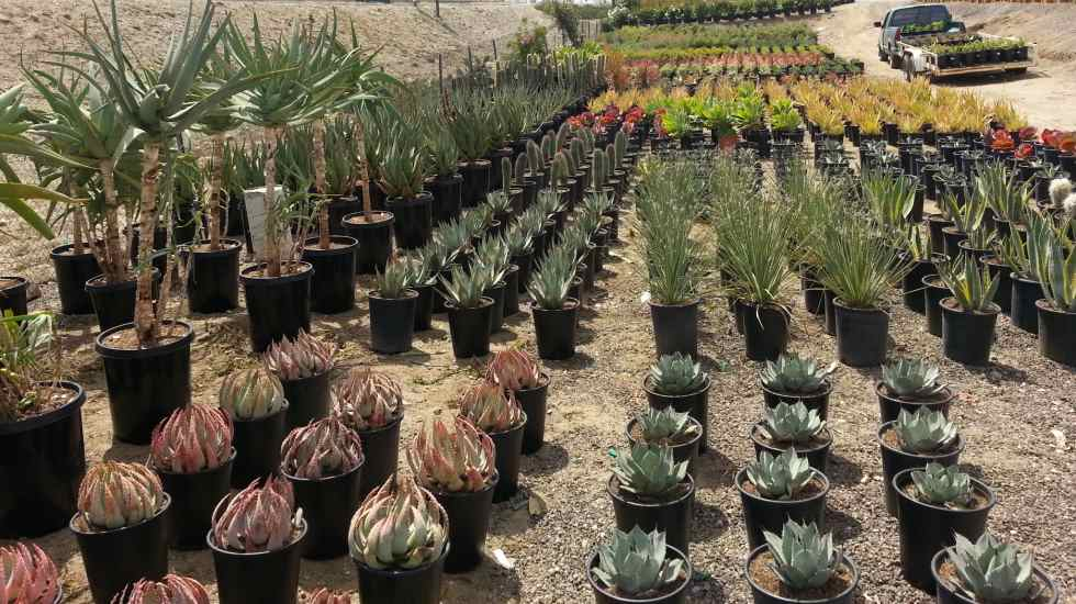 huge assortment of succulents