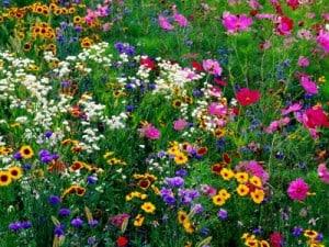Wildflower Gardens LANDSCAPE DESIGN CA